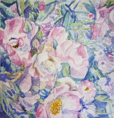 Roses in Taunton