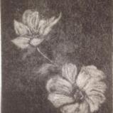 Intaglio Prints:  Mezzotints, Etchings