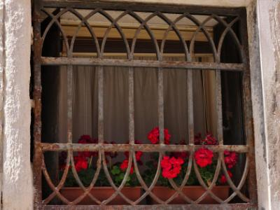 Red Flowers in Venice
