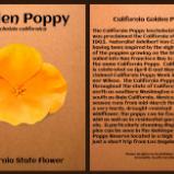 Golden Poppy California State Flower