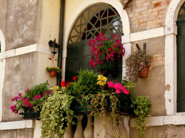 Windowsill in Venice