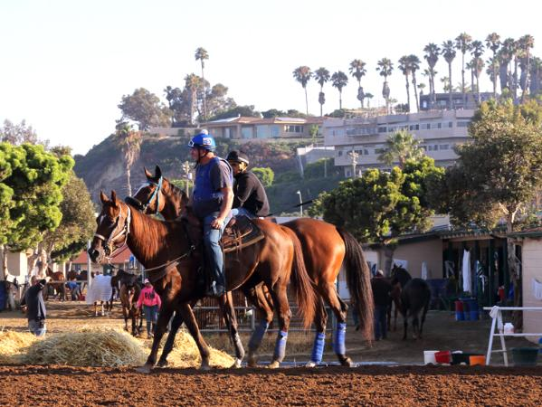 Del Mar Racetrack Early Morning Workout Thoroughbred Horses