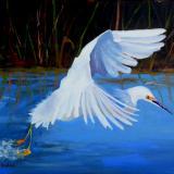 Snowy Egret Taking Off - oil - 16x20