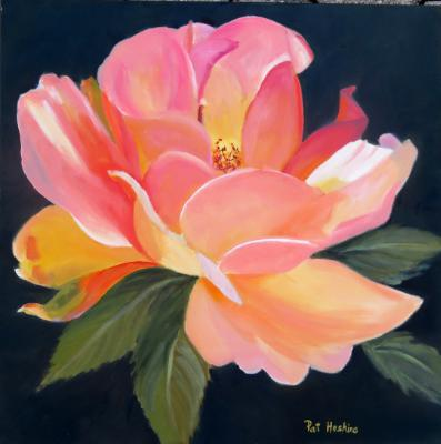 Pink and white rose   20x20   oil