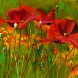 Red Poppies SOLD