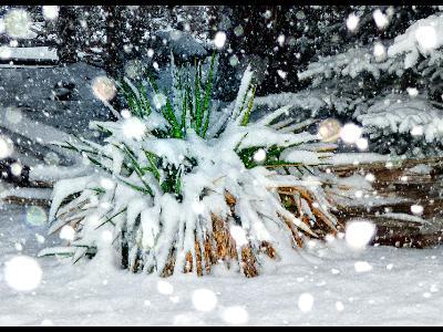 Big Bokeh in the Snow