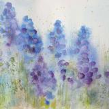 Grape Hyacinths ~ Sold