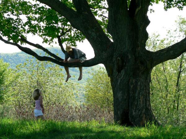 aa mine, winnie the pooh, david lee black,