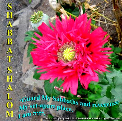 Lev 19:30~Shabbat Shalom