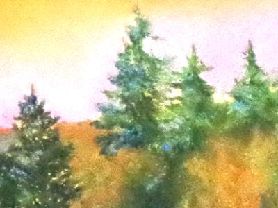 Sally Abbey - Fine Art Painting