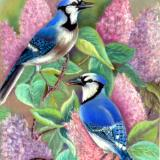 Blue Jays and Lilacs