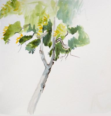 Zing Tree