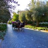 Horse 'n' Carriage, Royal Mansour