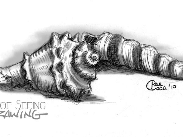 The Zen of Seeing Sea Shells