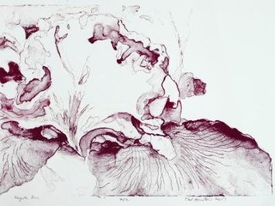 Magenta Iris 16 x 12 screen print