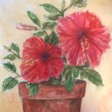 Hibiscus in Clay