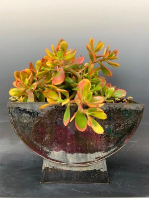 https://ceramicssuzy.wixsite.com/foryou