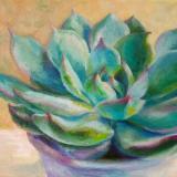 Tender Succulent