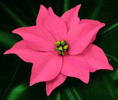 Pink Poinsettia Pin