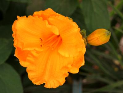 Lena's garden 11