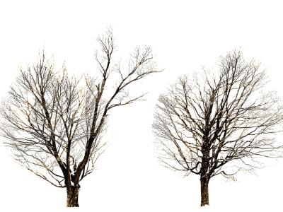 two trees present