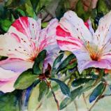 Azeleas - Pink & White