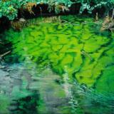 Green Dream (Robin Beneath) - Plitvice National Park, Croatia
