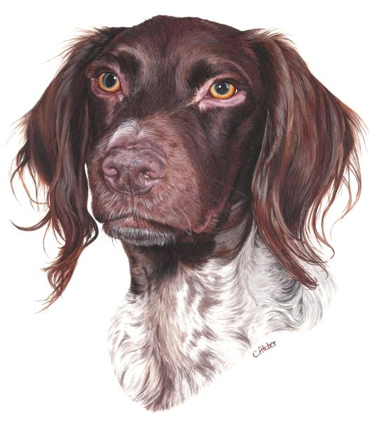 Lilly the German Pointer