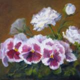 Pansies and Ranunculus