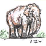 The Zen of Seeing Dengar the Elephant