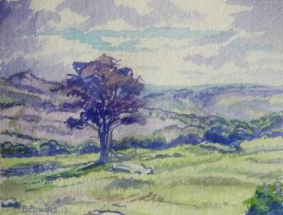 Hawthorn tree on Dartmoor, looking down on the Dart Valley