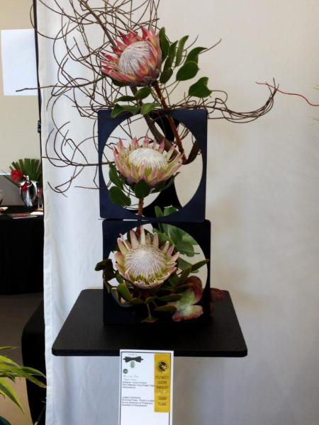 """3rd Prize """"Bright Outlook""""  King Proteas"""