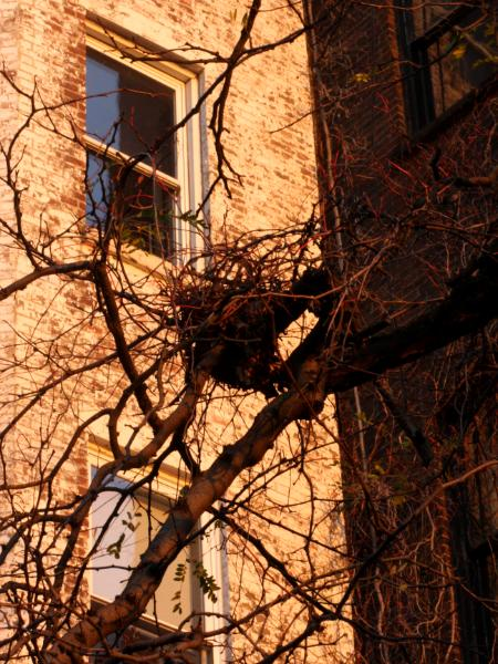 Nest on the Promenade