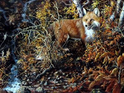 Backward Glance: Red Fox