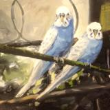 Blue Budgies, The Aviary, Swindon Old Town Gardens