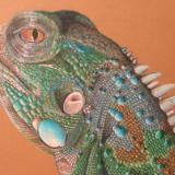 Iggy the Lizard