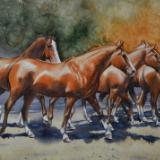 Horse watercolors