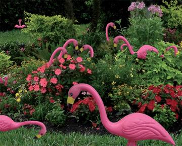 Flamingos in the Garden