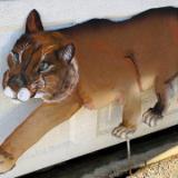 Crouching Cougar