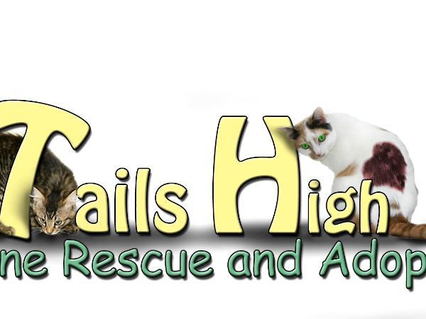 Tails High Logo v5