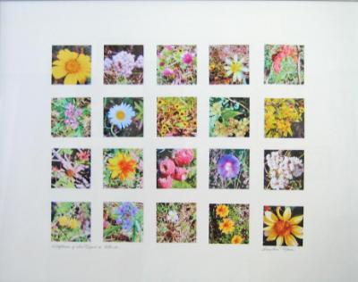 Wildflowers San Miguel de Allende