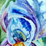 An Iris Close Up
