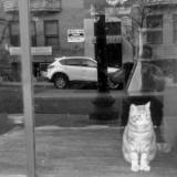 Cat in Closed Up Coffee Shop
