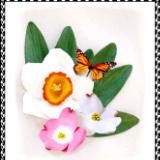 Narcissus, Dogwoods, Monarch Butterfly Pin or Hair Clip