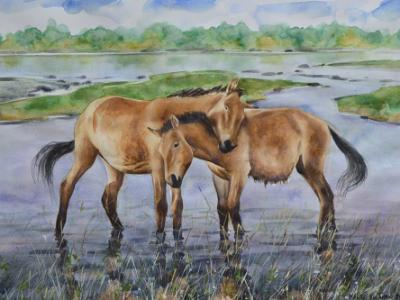 Couple of Mongolian horses, 35cm x 50cm, 2014