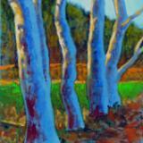 Eucalyptus Study I