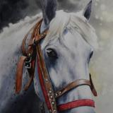 The beauty of the Russian Tersky Horse, 38cm x 56cm, 2019