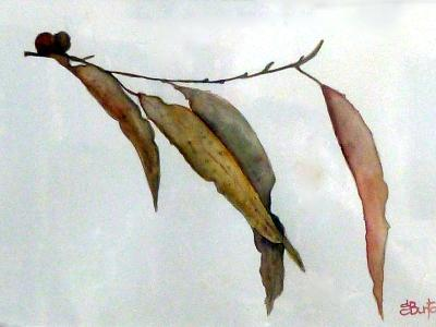 Eucalyptus Dancing