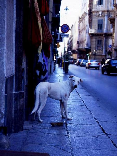 Naples dog