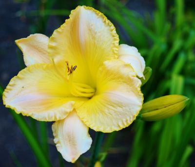 Lena's garden 4